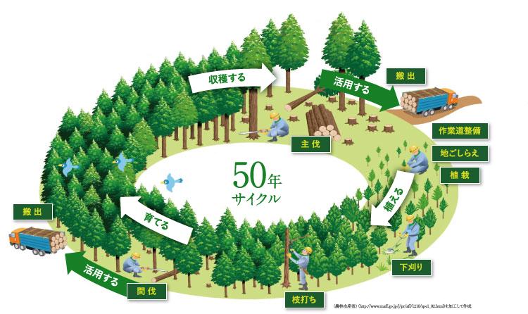 50年サイクル